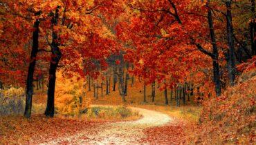 skove og træer