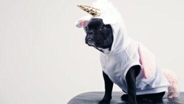 Hund i kostume
